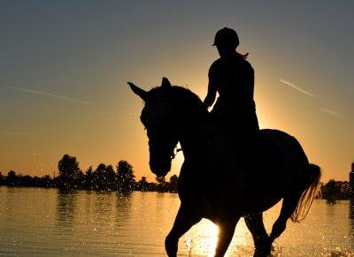 Horses in Hot Weather - Horseyard.com.au