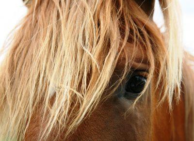 Horses Blink Less, Twitch Eyelids More When Stressed - Horseyard.com.au