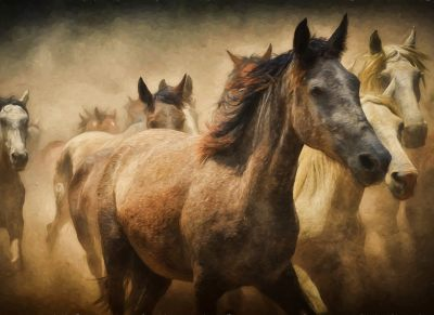 EVA calls for the welfare of all horses not just the blue bloods - Horseyard.com.au