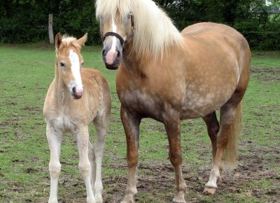 Warmblood Fragile Foal found in 21 breeds - Horseyard.com.au