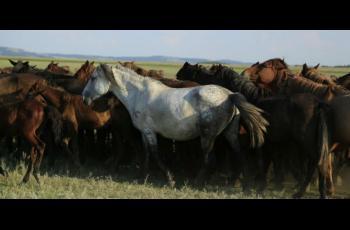 A genomic tour-de-force reveals the last 5,000 years of horse history - Horseyard.com.au