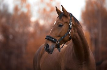 6 Ways To Keep Your Horse Healthy And Happy - Horseyard.com.au