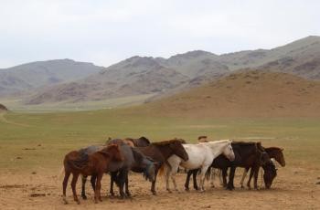 Oldest evidence of horse veterinary care discovered in Mongolia - Horseyard.com.au
