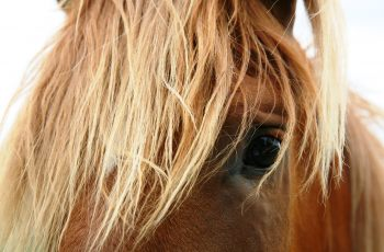 Horses Blink Less, Twitch Eyelids More When Stressed - Horseyard.com.au