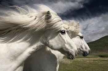 Twins take toll on horses - Horseyard.com.au