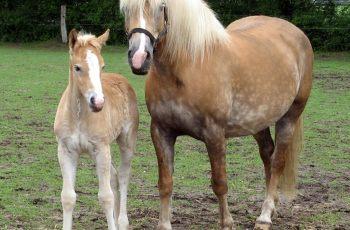 Warmblood Fragile Foal found in 21 breeds - Horseyard.com.au