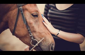 Academic to evaluate impacts of horse assisted therapy - Horseyard.com.au