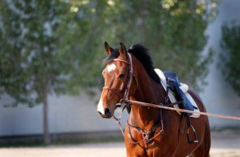 The ultimate equine behaviour assessment tool - Horseyard.com.au