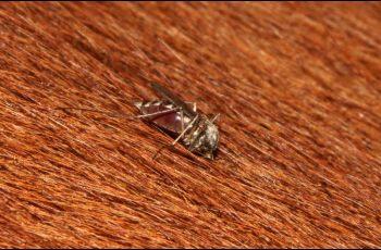 Equine alert issued for mosquito-borne disease - Horseyard.com.au