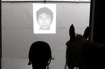How do horses read human emotional cues? - Horseyard.com.au
