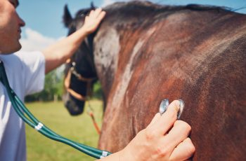 New strain of deadly Hendra virus (HeV) discovered - Horseyard.com.au
