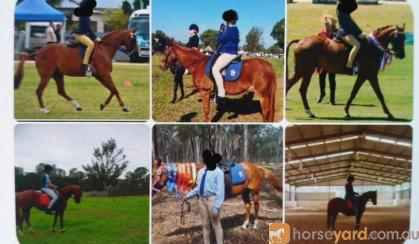 13hh 15 yrs old Educated Mare on HorseYard.com.au