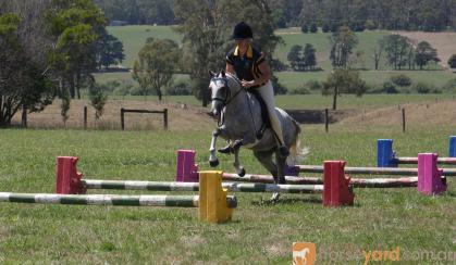 Hillen Rossington on HorseYard.com.au