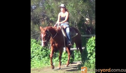 Dead Quiet Red Pure QH Gelding + VIDEO+ on HorseYard.com.au