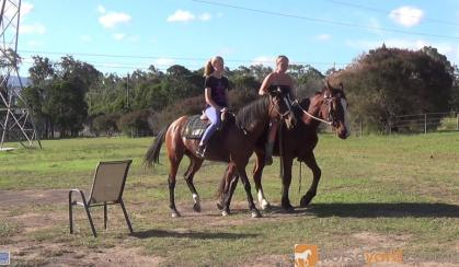 Quiet Aust Stock Mare + VIDEO+ on HorseYard.com.au