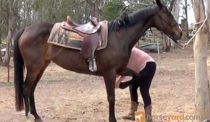 Pretty Aust Stud Book Mare + VIDEO+ on HorseYard.com.au
