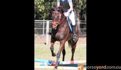 Mishani Phoenix  on HorseYard.com.au