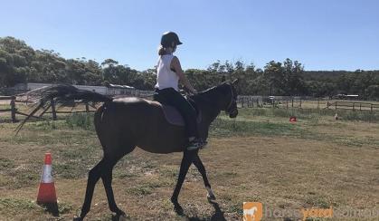 Star (Star of London)  on HorseYard.com.au