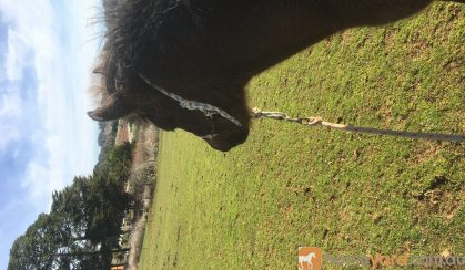 Filly For Sale upon weaning. on HorseYard.com.au