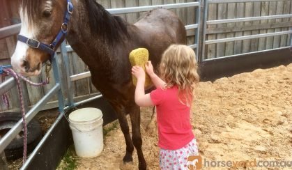 Beautiful Welsh mare on HorseYard.com.au