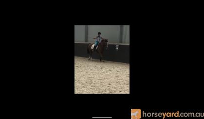 Splash on HorseYard.com.au