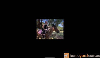 Fire- Stock horse pony  on HorseYard.com.au