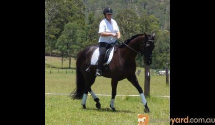 Intro Eventer/80cm SJ on HorseYard.com.au