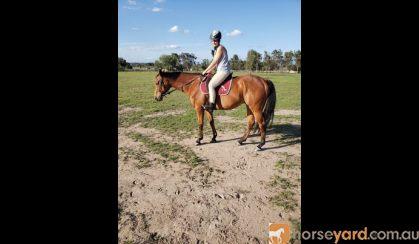 Boss tb on HorseYard.com.au