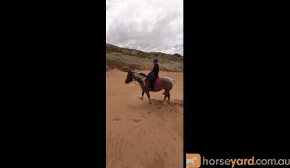 Beautiful PHHA Registered Paint Mare (SOLD PENDING PAYMENT) on HorseYard.com.au