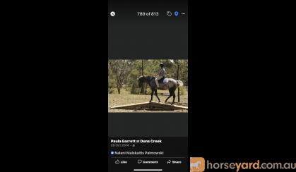 Hazy 15hh Fast and fun , agile all rounder  on HorseYard.com.au