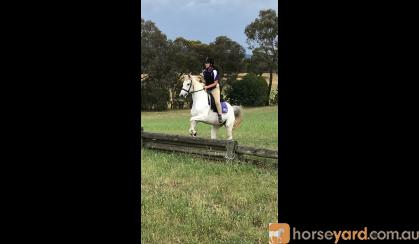Banjo 14.1HH, 14 year old Paint on HorseYard.com.au