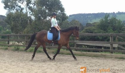 Project Off The Tracker on HorseYard.com.au