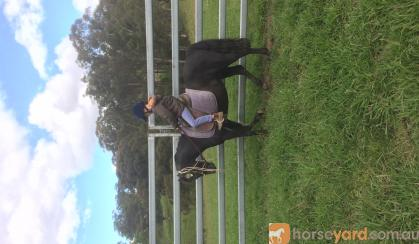 Reg Black show Pony on HorseYard.com.au