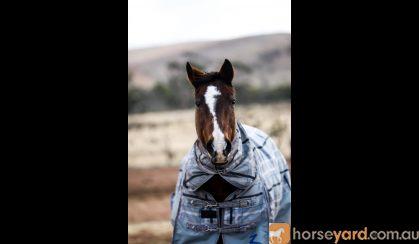 Sassy but fun! on HorseYard.com.au