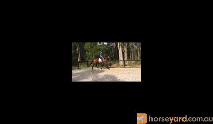 Whynston on HorseYard.com.au