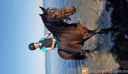 Mischa on HorseYard.com.au