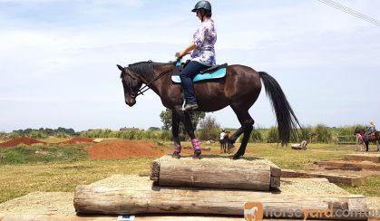 14yo QH Mare  on HorseYard.com.au