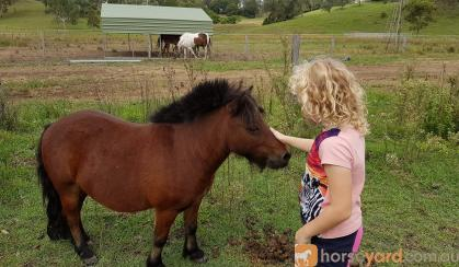 Miniature Pony on HorseYard.com.au