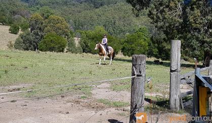 Paint x qh mare on HorseYard.com.au
