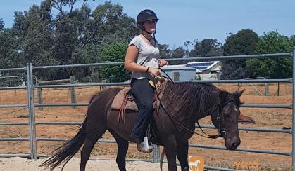 Heritage listed stockhorse mare on HorseYard.com.au