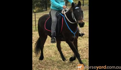 13.3hh mare on HorseYard.com.au