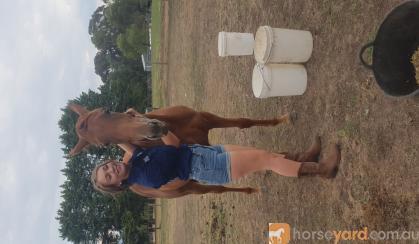 2yo unbroken filly on HorseYard.com.au