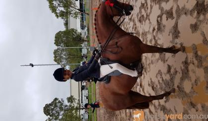 Super Childs All Rounder on HorseYard.com.au