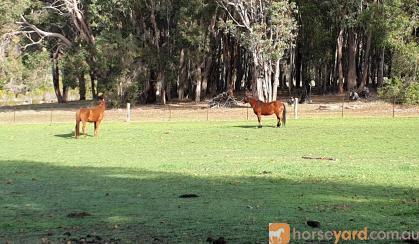 2 Horses free to good home on HorseYard.com.au