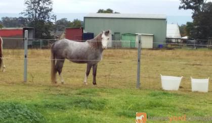 Trinity Wild Ivory on HorseYard.com.au