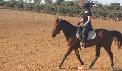 Super quiet unlimited potential  on HorseYard.com.au
