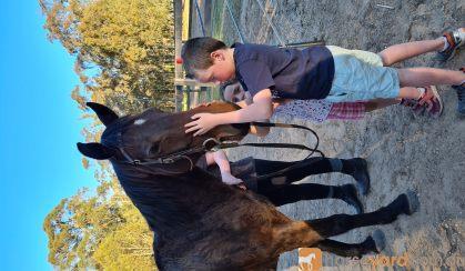 Quiet horse on HorseYard.com.au