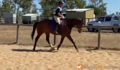 Reg QH Mare on HorseYard.com.au