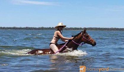 QUALITY MARE on HorseYard.com.au