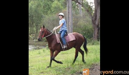 Sold on HorseYard.com.au